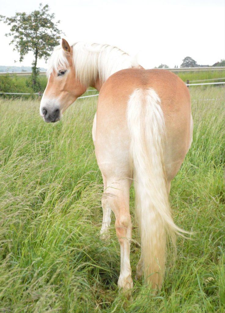 Rückansicht Pferd