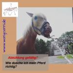 Abkühlung gefällig? – Wie dusche ich mein Pferd richtig?