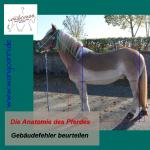 Die Anatomie des Pferdes - Gebäudefehler erkennen