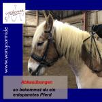 Abkauübung - so bekommst du ein entspanntes Pferd