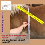 Bin ich zu schwer für mein Pferd? – wie viel Gewicht ist noch gesund?