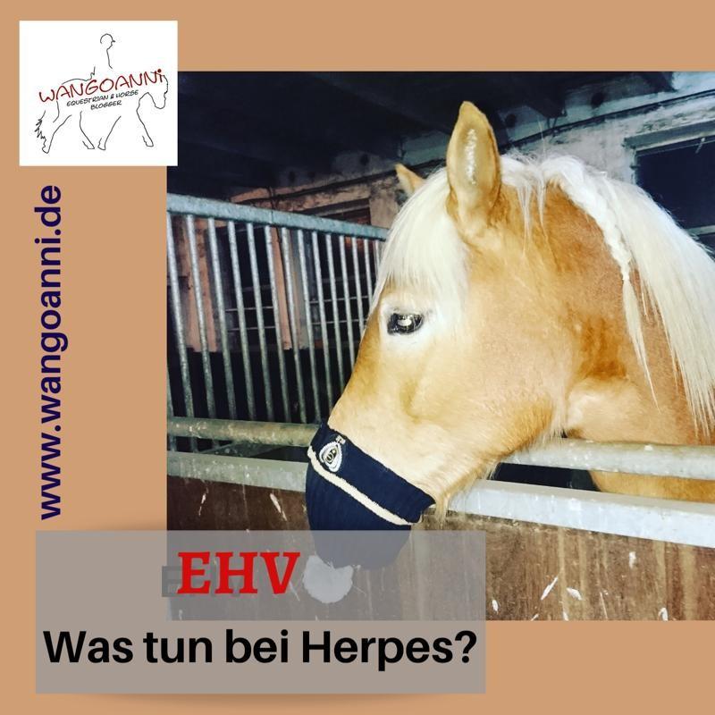 Herpes beim Pferd