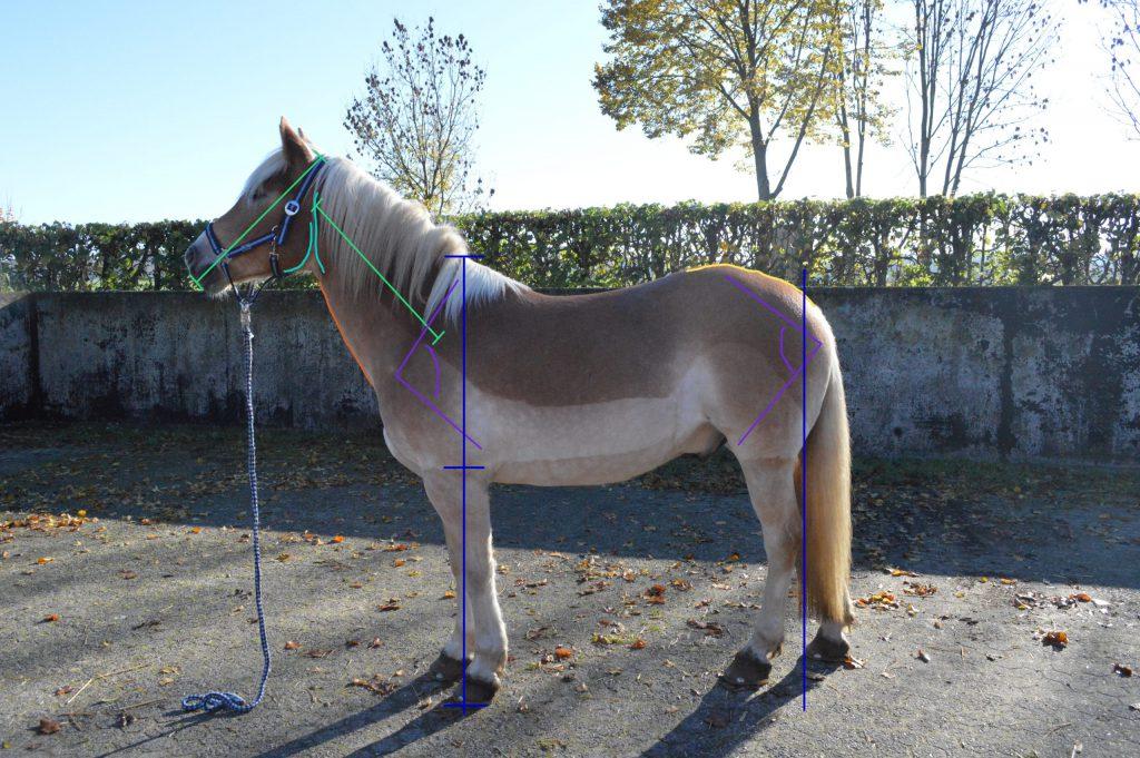 Gebäudebeurteilung Pferd