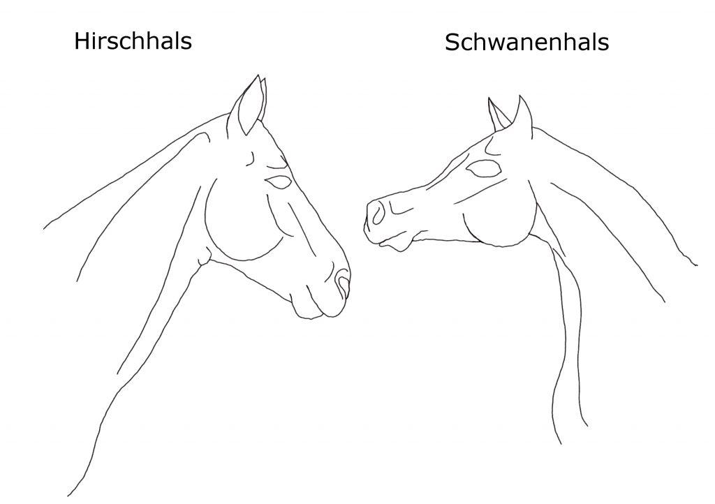 Pferdehals