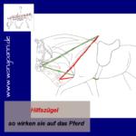 Hilfszügel - so wirken sie auf das Pferd